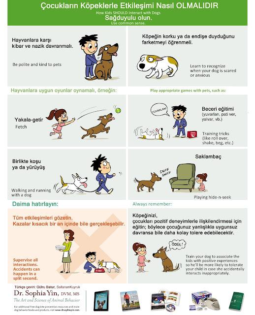 Köpeklerde sosyalizasyon