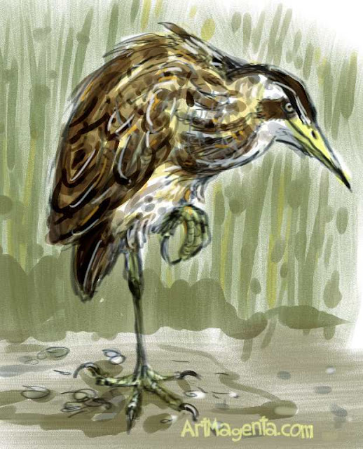 Bittern sketch painting. Bird art drawing by illustrator Artmagenta
