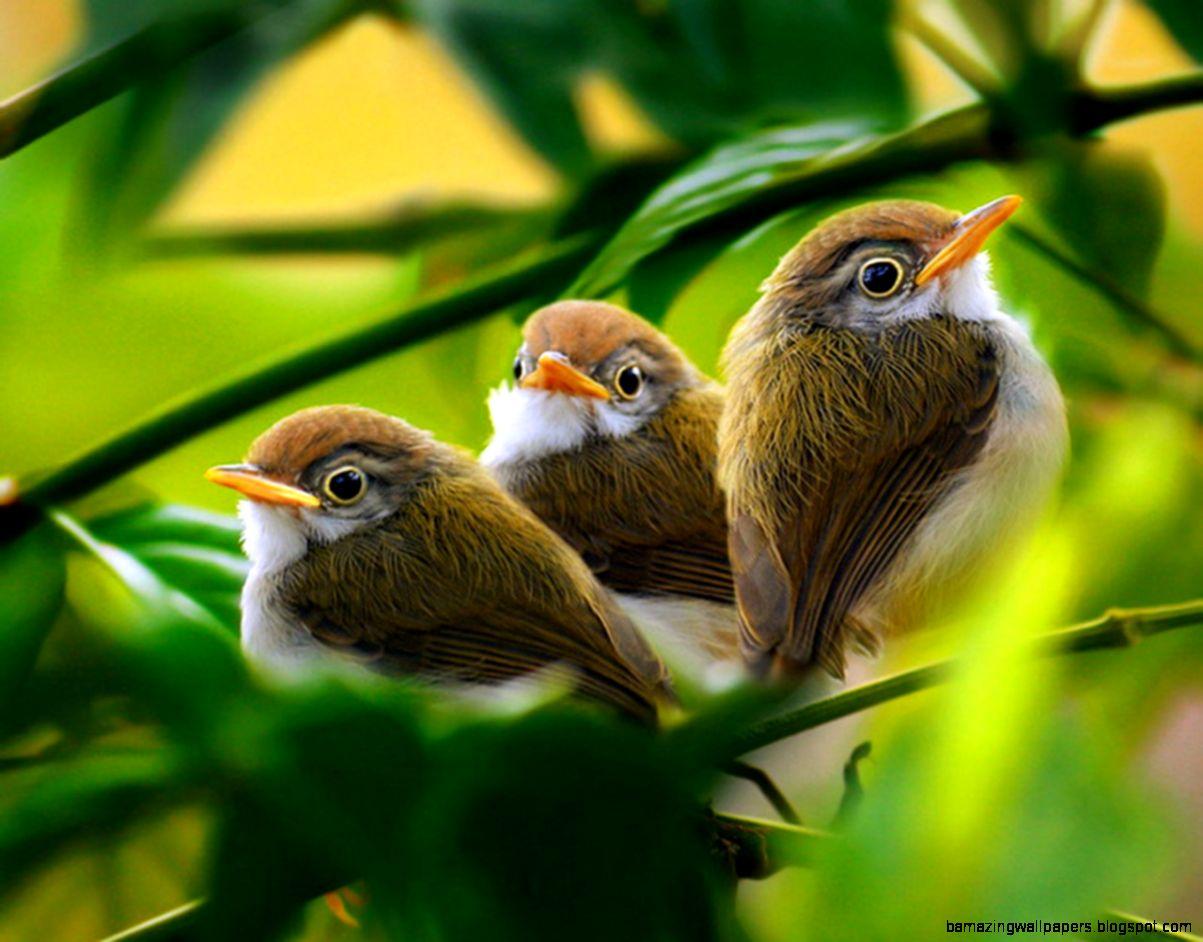 Baby Bird Wallpapers