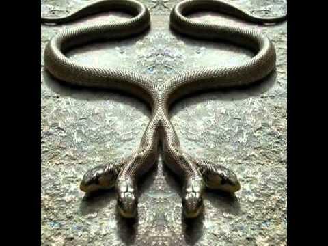 [Giải đáp] -  Mơ thấy con rắn 4 đầu