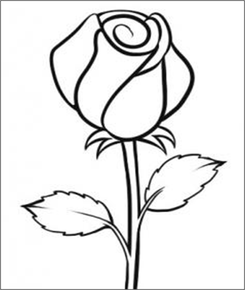 5 Langkah Menggambar Bunga Mawar dengan Cepat dan Mudah