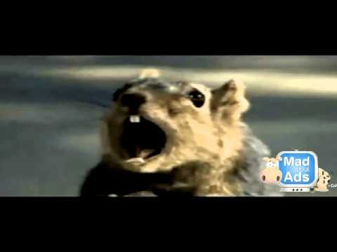 planets funniest animals youtube - photo #19