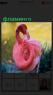 стоит розовый фламинго согнув свою голову к туловищу