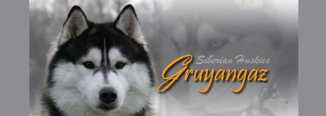 Portada Pagina Web Nueva Gruyangaz Siberians