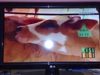 Hasil Gambar Televisi Kualitas Terbaik dengan Antena TV Bagus 15