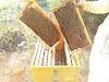 Μόνωση σφίξιμο μελισσιών και ταίσμα. 5 ΣΩΣΤΟΙ χειρισμοι!