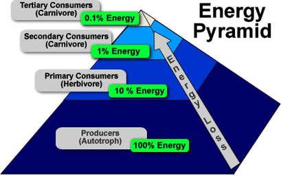 define ecological efficiency