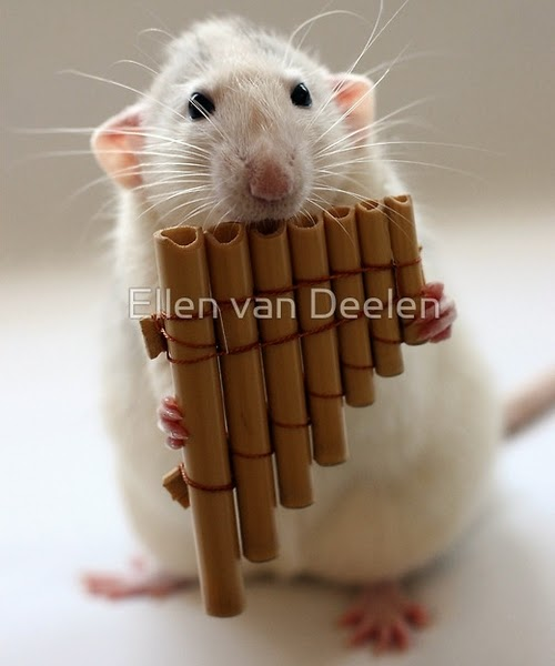 13-The-Pan-Flute-Player-Musical-Dumbo-Rat-Ellen-Van-Deelen-www-designstack-co