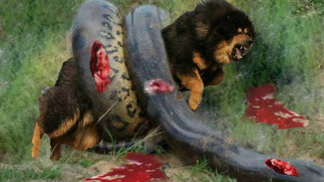 animal attack attacks animals wild dog snake anaconda death compilation fight vs