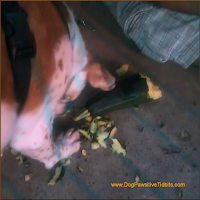 DogPawsitiveTidbits.com  Dog Shreds Zucchini