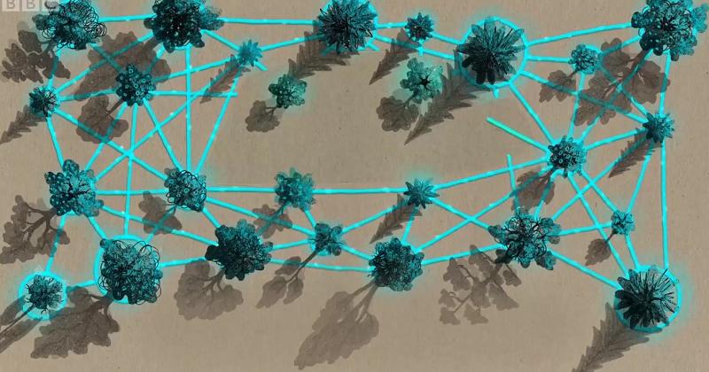 La comunicación secreta de los arboles (vídeo)  5559b7f83cf