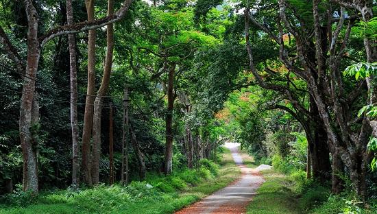 Du lịch vườn quốc gia Ba Vì, kinh nghiệm tham quan vườn quốc gia Ba Vì