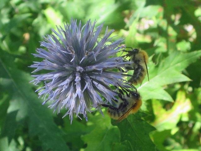 Lebah dan Bunga | liataja.com