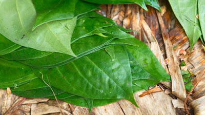 Betel leaves for Long Thick Hair Naturally!