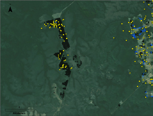 Significant deforestation in Brazilian Amazon goes undetected