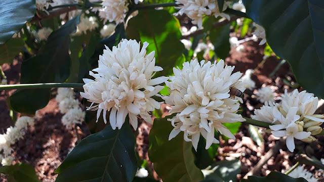 Ong hút mật hoa