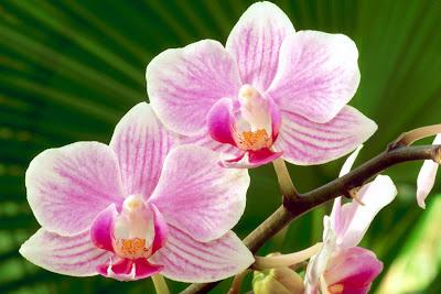 Hình ảnh hoa lan đẹp nhất