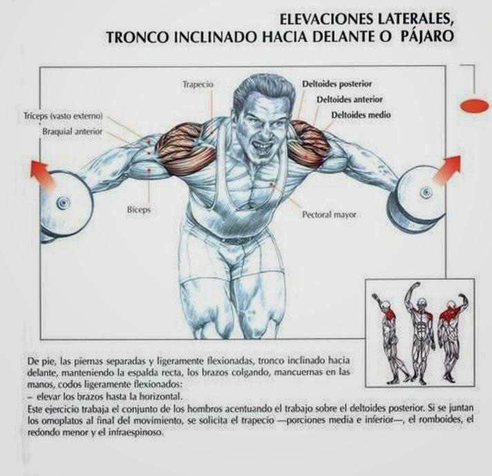Dietas y deporte: 5 EJERCICIOS IMPRESCINDIBLES PARA EL DELTOIDES