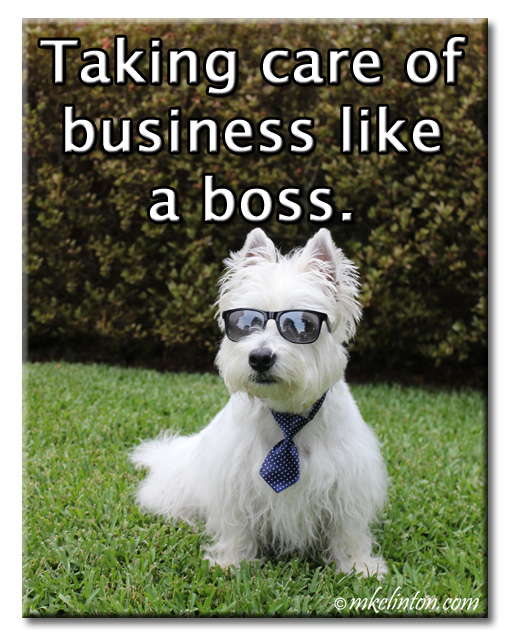 "Pierre Westie meme ""Taking care of business like a boss."""