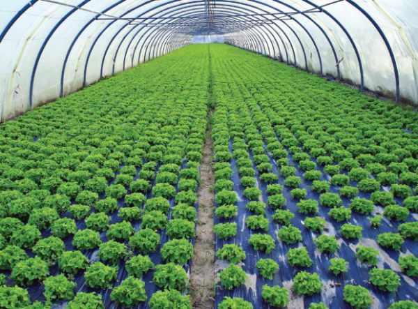 21 Prospek Kerja Agribisnis Yang Menjanjikan Habibullah Al Faruq