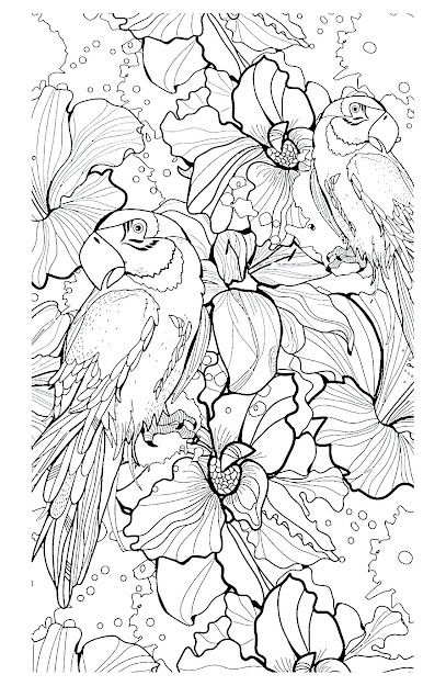 Free Coloring Page Coloringadultdifficultparrots Animal Coloring  Pagescoloring