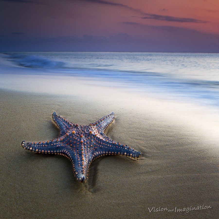 18. Sea Star by Garry Schlatter