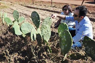 Governo entrega raquetes de palma para agricultores de Picuí
