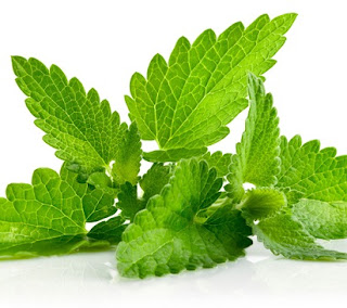 cara membuat jus daun mint,daun mint beli dimana,khasiat daun mint dan lemon,manfaat daun mint bagi kesehatan,manfaat daun mint untuk kulit wajah,resep minuman daun mint,