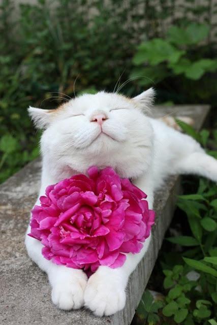 """17 minh chứng cho thấy mèo cũng """"độc thân vui tính"""" chẳng kém gì con người"""