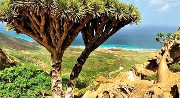 Inilah Pulau Socotra, Tempat yang Berkemungkinan Besar Tempat Dajjal Dikurung Sekarang Ini!
