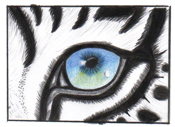 Las Cosas De Carocha: Ojos Animales