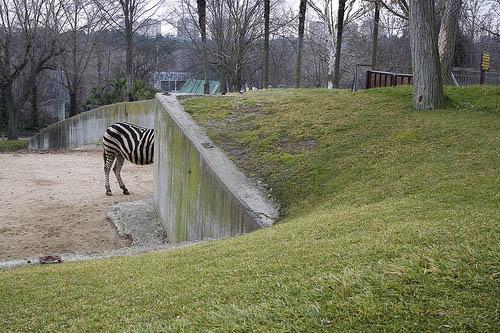 dirty blog - photo stories - Zebra