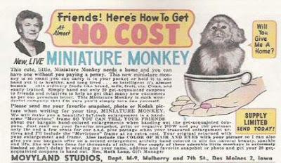 Movyland Studios - miniature monkey