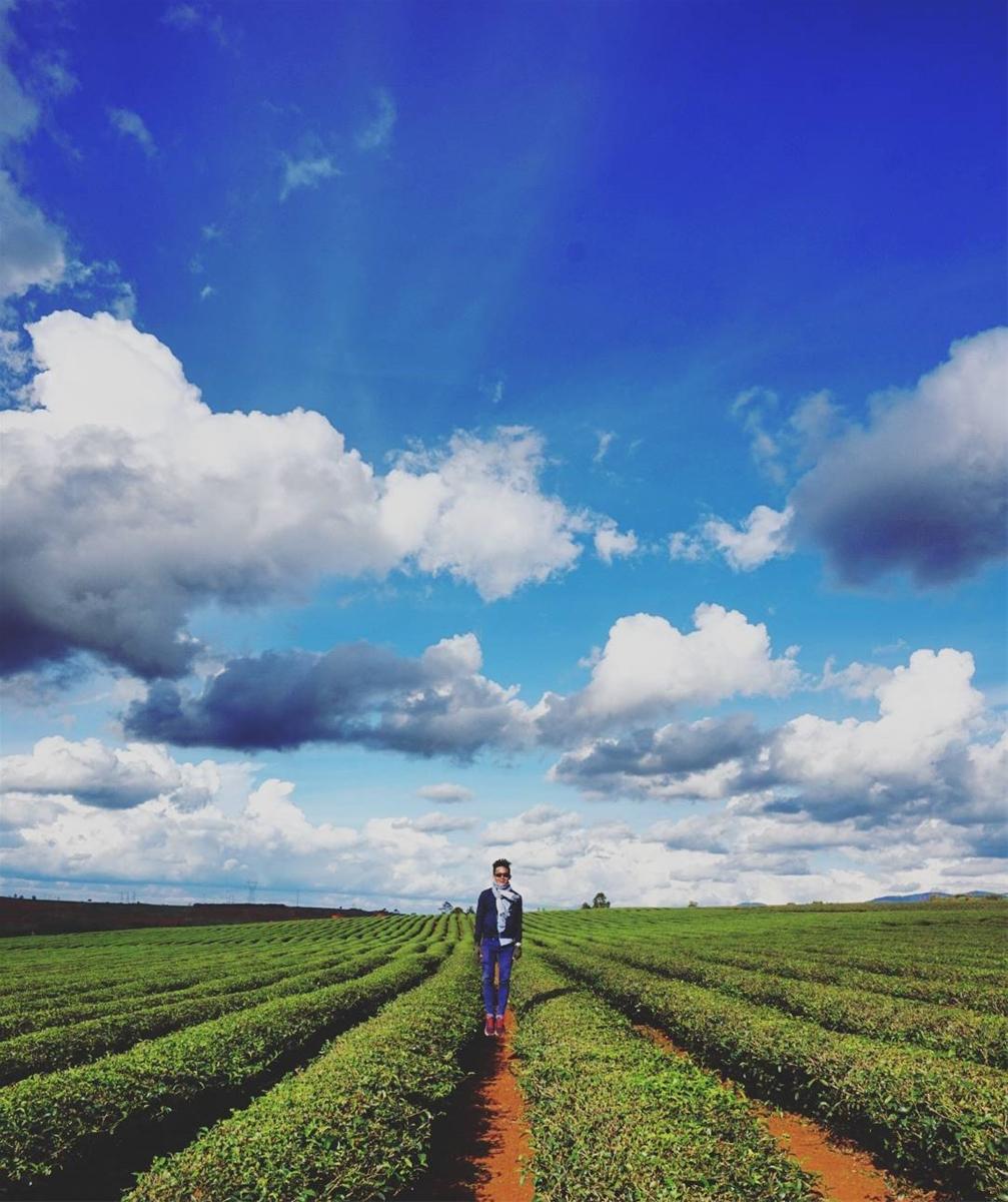 Cao nguyên Di Linh: Vẻ đẹp hoang sơ đầy thơ mộng