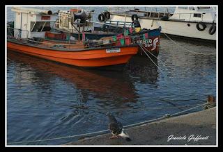 Barcos. Puerto del Buceo.