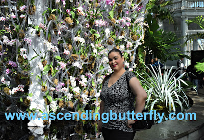 Ascending Butterfly #FlowerWal New York Botanical Garden Orchid Show 2018 #OrchidNYBG