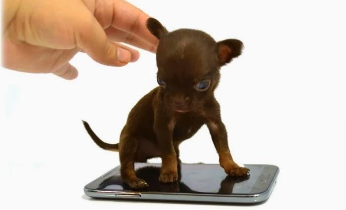 smallest-animals-in-the-world-duniya-ke-sabse-chote-aakar-ke-jaanwar
