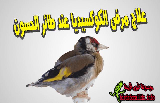 علاج مرض الكوكسيديا عند طائر الحسون