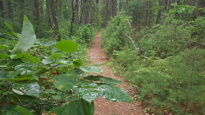 along the white blaze trail in Franklin Town Forest (off Summer St)