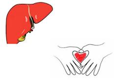 7 Fungsi Hati Dan 6 Tips Perawatan Untuk Kesehatan Hati Anda