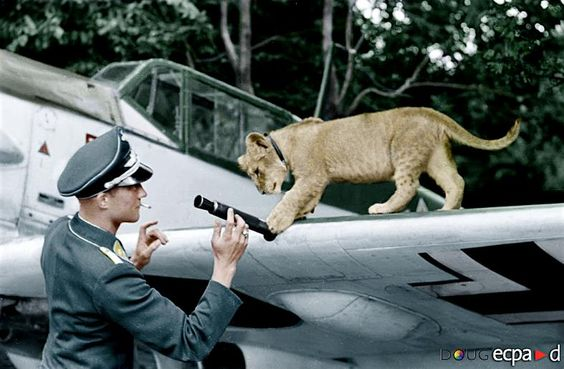 4 August 1940 worldwartwo.filminspector.com Franz von Werra Bf 109E pet lion cub Simba