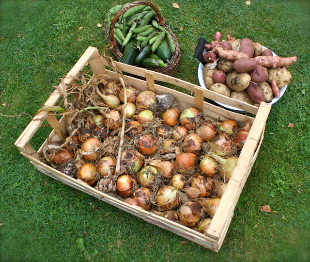 onions, potatoes, beans, courgettesfrom garden