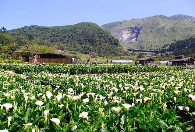 타이베이시(台北市):베이터우구(北投區) 주쯔호(竹子湖) [대만 관광국 홈페이지 캡처]