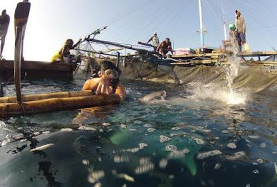 Wisata Teluk cernderawasih papaua