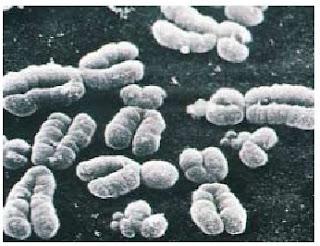 kromosom, kromosom manusia, genetika kromosom