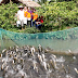 Ở nơi cồn giữa sông Hậu có đàn cá lóc bay?