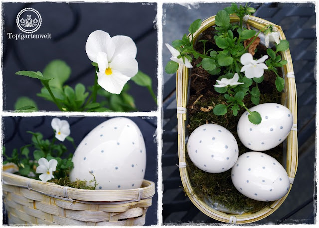 Gartenblog Topfgartenwelt Osterdeko: ein Osternest gefüllt mit einem Porzellanei und Hornveilchen