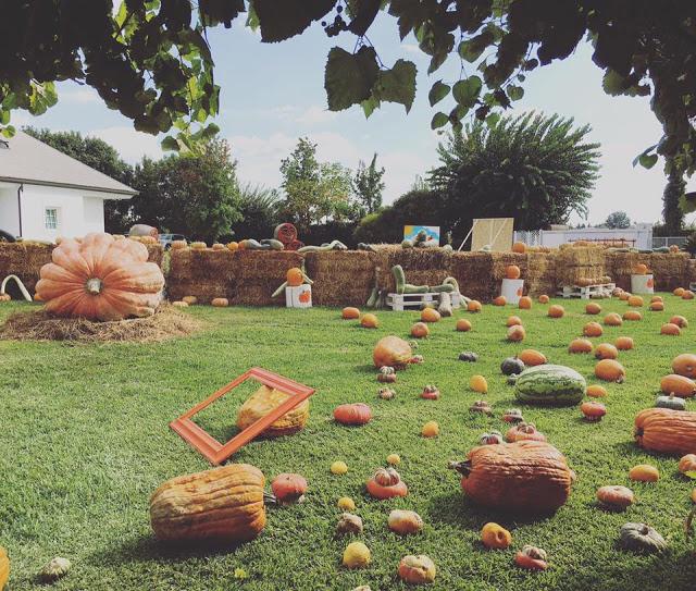 Il Giardino Delle Zucche Pumpkin Patch