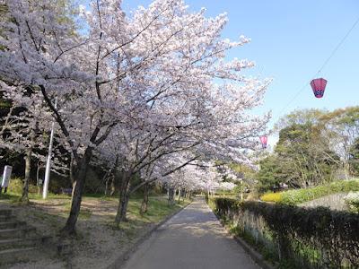 寝屋川公園の桜・お花見ウォーキング 花の道