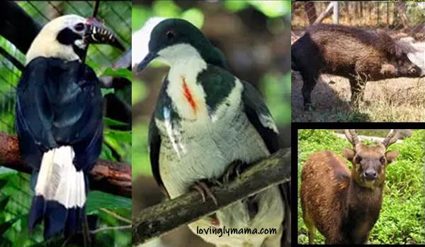 Negros Forest - homeschooling - Dora the Explorer - kiddie adventure - Bacolod mommy blogger